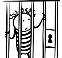 Education Behind Bars